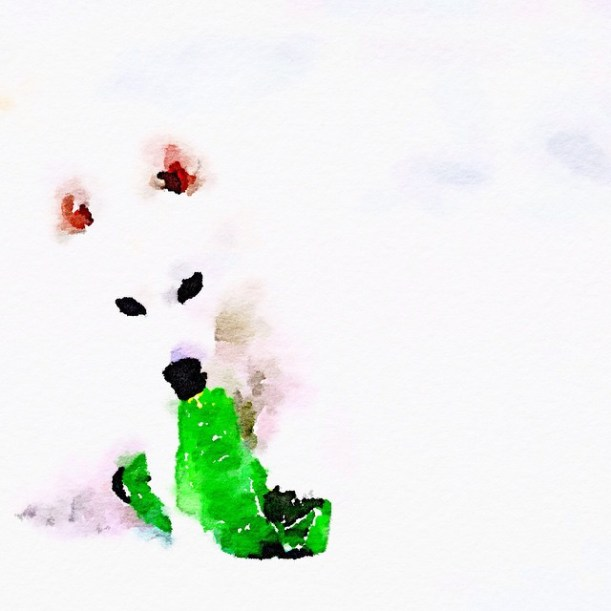japanese spitz artwork