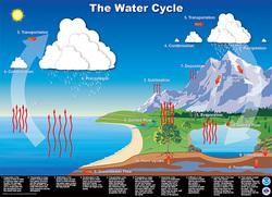 Nutrient Cycles  Japanese Tsunami