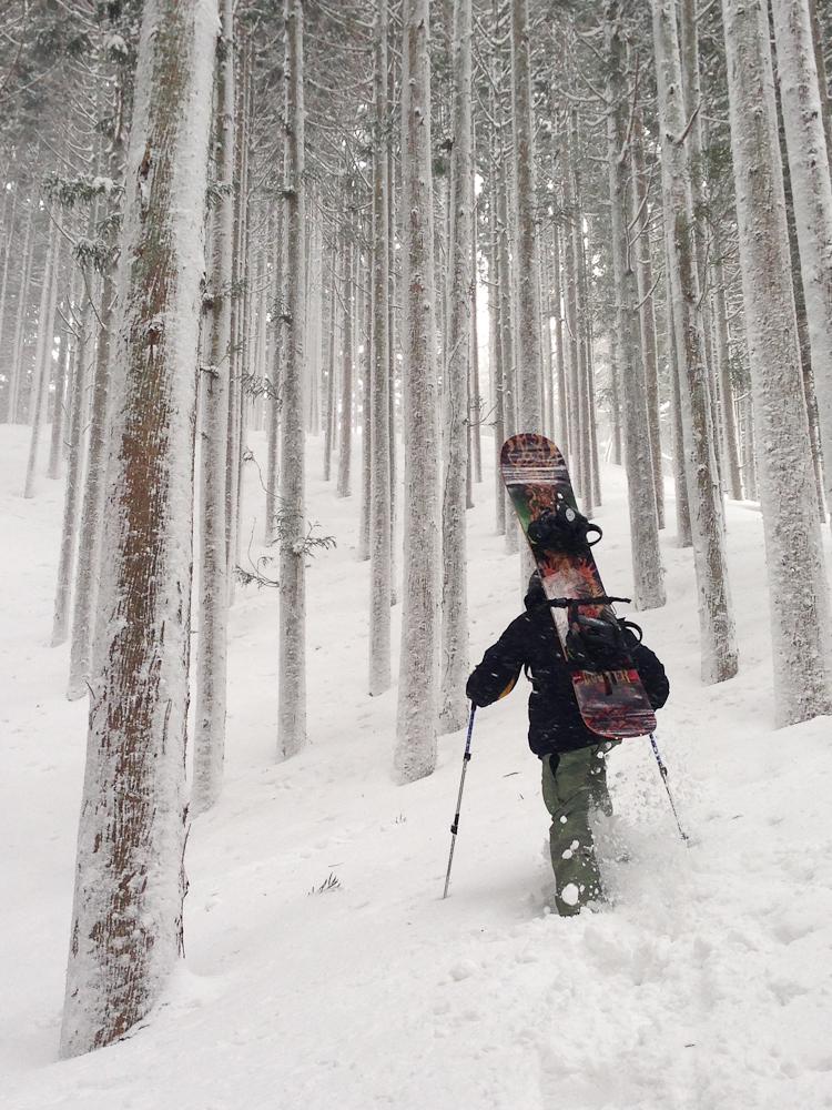 Ursa Major hiking snowy trees
