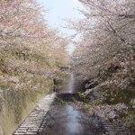 meguro_river_sakura_tokyo