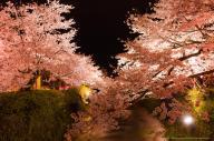 山口市一ノ坂 桜ライトアップ by ryuji kawano