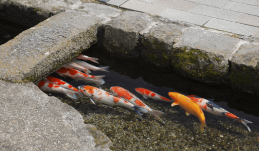 Shimabara ~Water city of Nagasaki tour