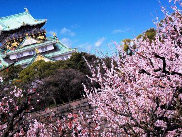 Osaka ume plum