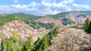 Mt. Yoshino from Yoshimizu shrine