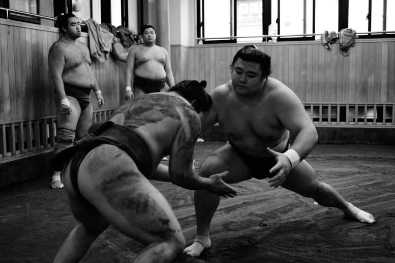 ALF_8512_sumo-small