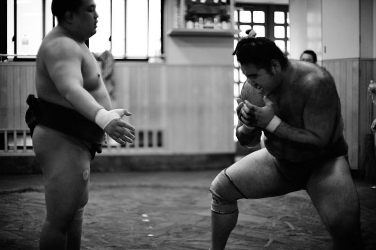 ALF_8522_sumo-small