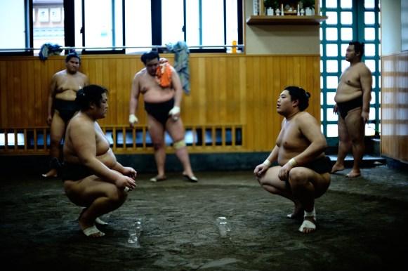 ALF_8636_sumo-small
