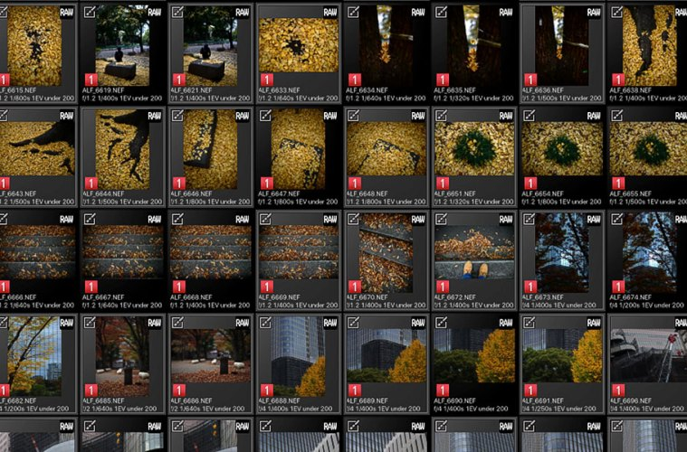 Photos of Hibiya Park in autumn and Ginza's urban delights