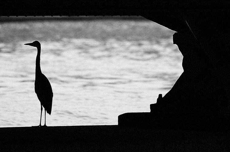 A heron under a bridge on the Sumida River in Tokyo