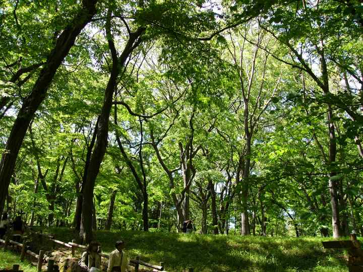Inogashira Park has a beautiful canopy.