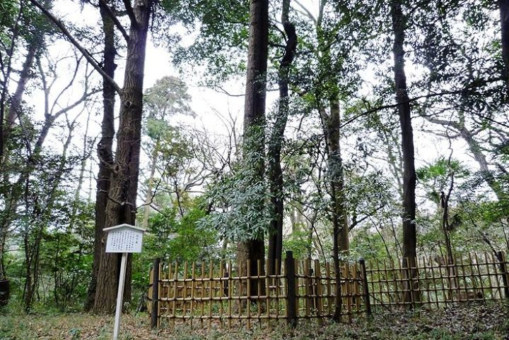 This is where the sign says the big fir tree of Yoyogi was.