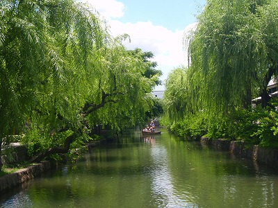 Willow trees. Yanagi.