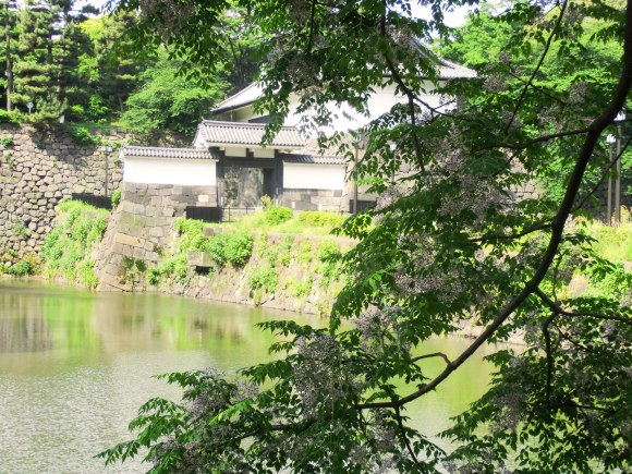 Chinaberry is a flowering tree. There are many planted around Edo Castle. In the background you can see (I think) Shimizu Mon.