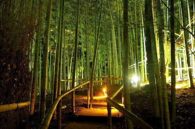 shirotori-garden-lightup-17