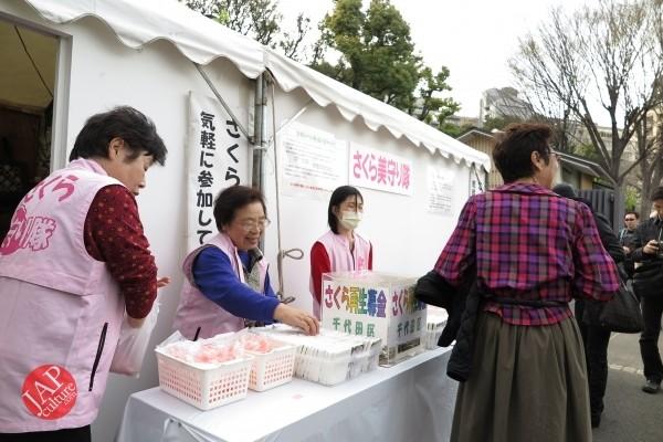 Sakura Best viewing, Imperial garden, Chidorigafuchi. 360 degree cherry blossom experience (3)