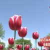 Captura de Tela 2017-04-24 às 10.41.00