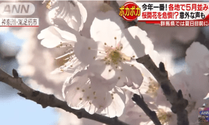 2018: Japan will experience the warmest season this year