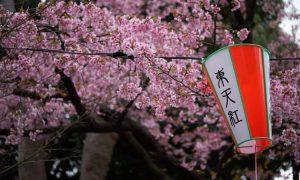 Tokyo - Ueno Cherry Blossom Festival 2019