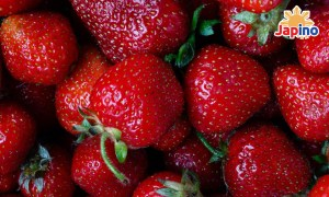 STRAWBERRY MADE IN TOKYO