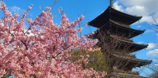 La flor de ciruelo en Japón