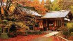 """""""koyo"""", el enrojecimiento de las hojas de los árboles en otoño"""