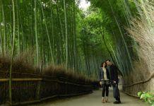 Día de la naturaleza en Japón (el famoso bosque de bambú de Sagano, Kioto)