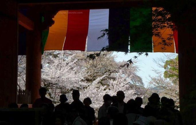 Hanami en un templo de Kioto