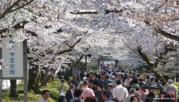 Alrededores del templo Daigoji (KIoto) durante la floración del cerezo (hanami)