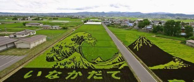 Descubrir Japón: los bellos arrozales de Inakadate