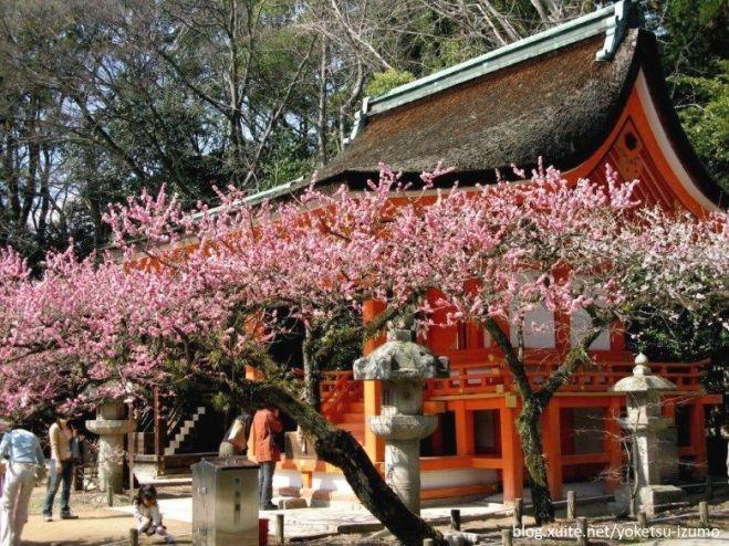 La flor de ciruelo (梅, ume) es el primer signo en Japón de que la primavera está más cerca.