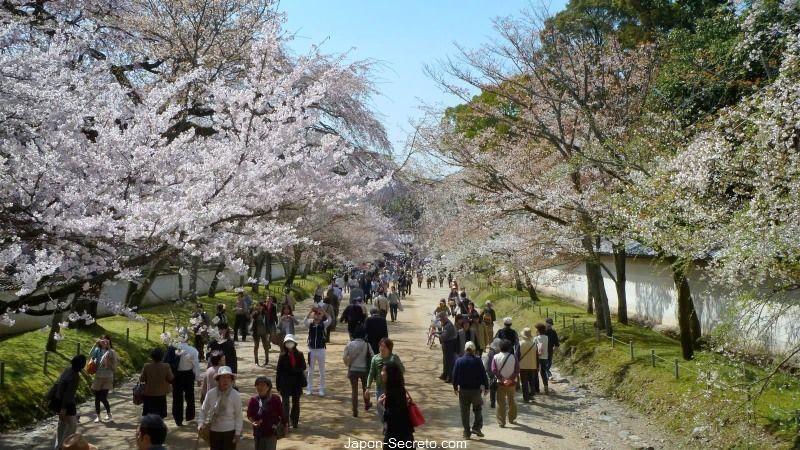 0e61db2ea5 Jardines del templo Daigoji (Kioto) durante el florecimiento de los cerezos  (sakura)