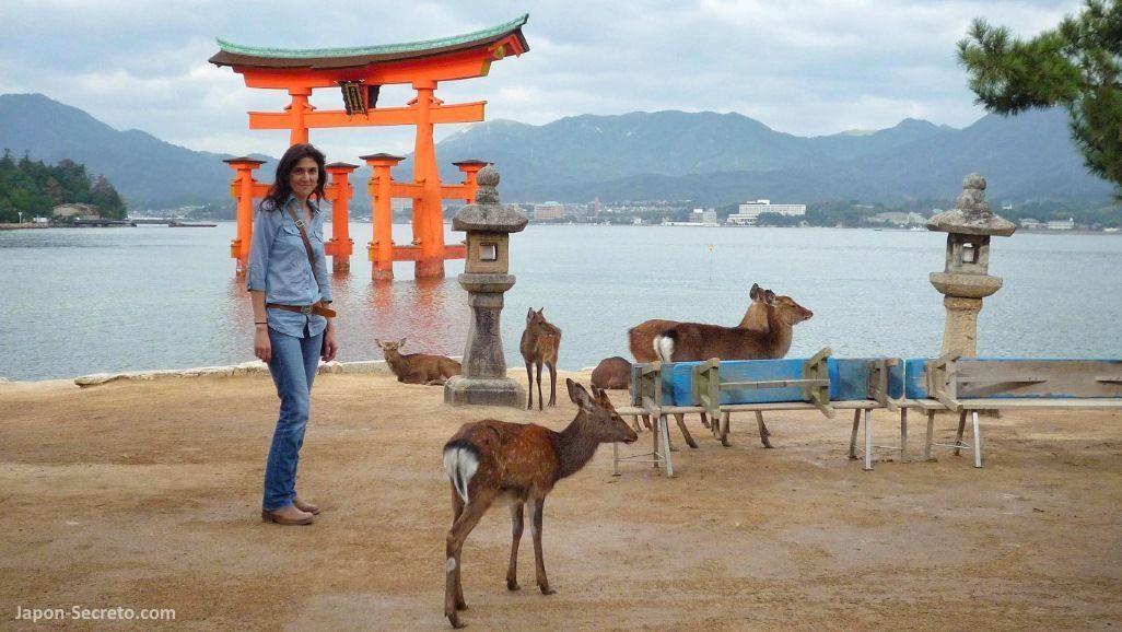 Isla de Miyajima (bahía de Hiroshima). Vista del famoso torii del santuario Itsukushima