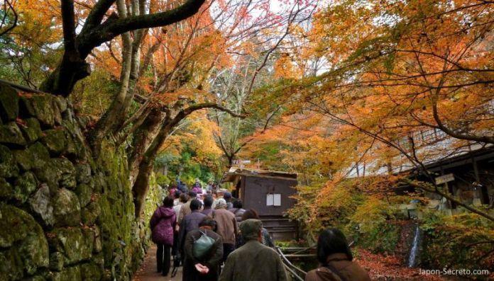 Templo Sanzen-in (三千院) en Ohara (Kioto) durante el momiji (otoño) en Japón