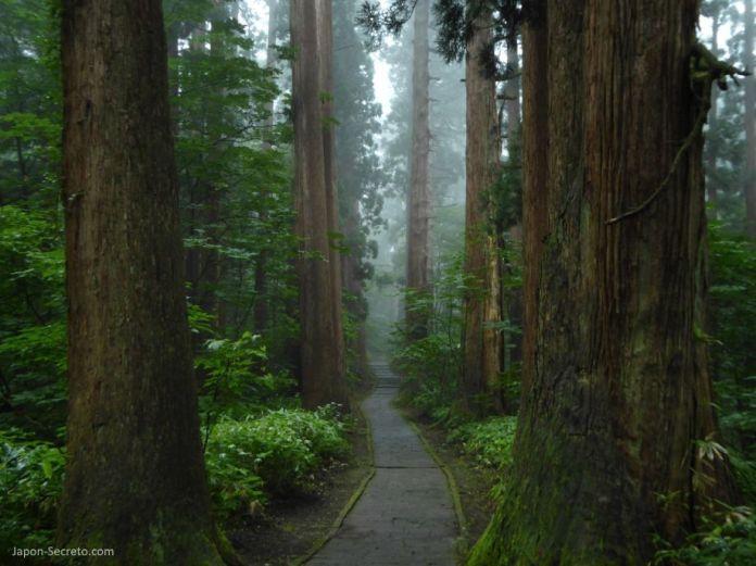 Japón. Ruta de peregrinación Dewa Sanzan. Monte Haguro (Hagurosan). Bosque de arces y sendero de piedra. 2446 escalones. Senderismo. Ruta a pie.