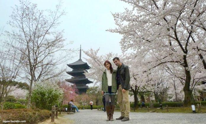 Cerezos en flor (sakura) en Japón. Primavera. Cerezos en Kioto. Templo Toji. Pagoda.