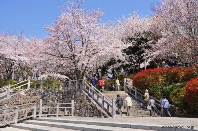 Asukayama. Ver flores de cerezo en Tokio. Primavera.