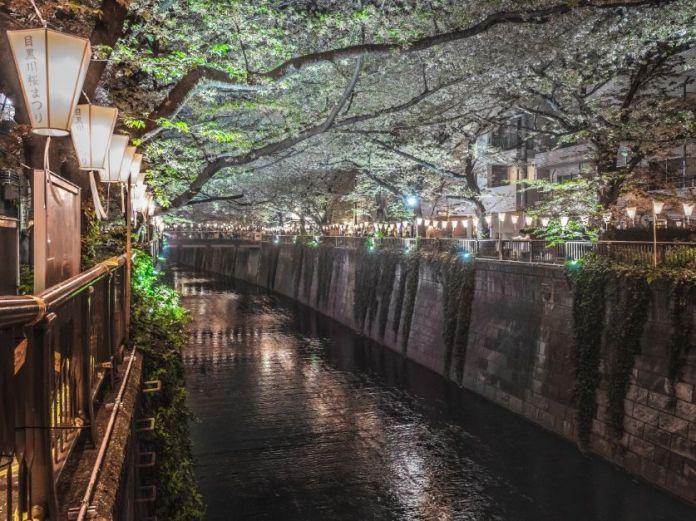 Meguro. Yozakura. Ver flores de cerezo o sakura en Tokio. Primavera.