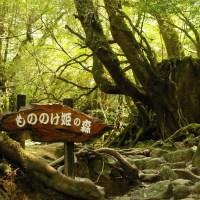 Princesse Mononoke - La forêt de Yakushima
