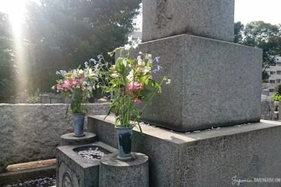 Hanami w Tokio Cmentarz Aoyama (26)