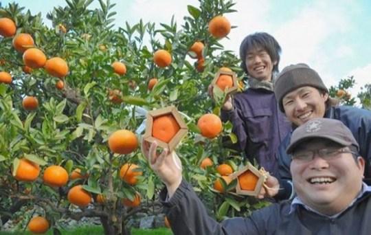 Naranjas pentagonales - JaponPopJaponPop