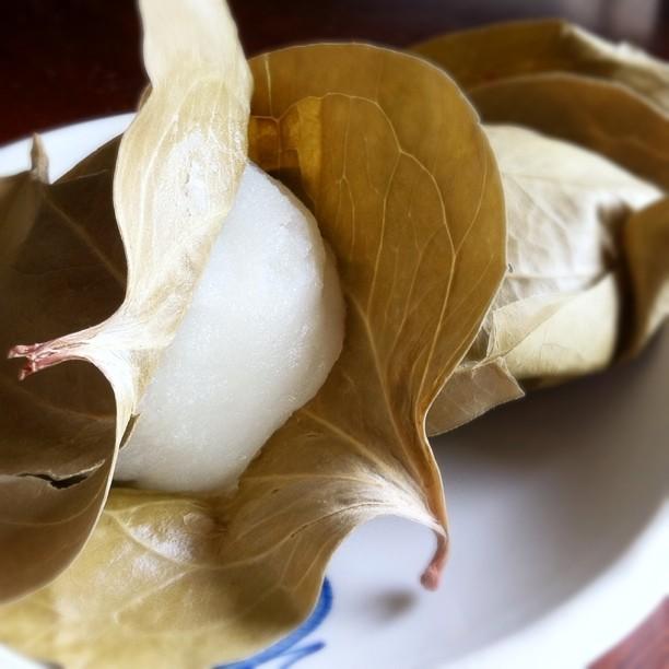 Mochi (gâteau de riz gluant) dans une feuille de chêne