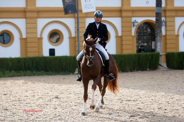 SAROTTI (Sarkozy x Janira) un Oldenburgo propiedad de Omnium Team S.L. y montado por Juan Carlos Díaz Amor. Foto de topiberian.com.