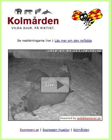 Nostalgi: Noshörningen Nelson och live på nätet