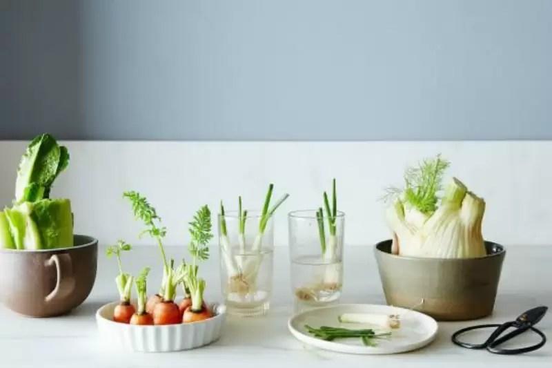 Aprenda a como replantar os restos de sua cozinha