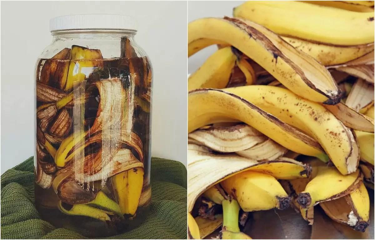 Aprenda a fazer adubo orgânico de casca de banana