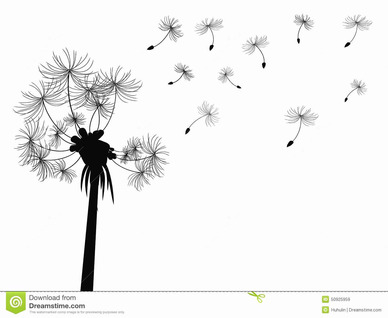 dessin fleur noir et blanc beau fond de