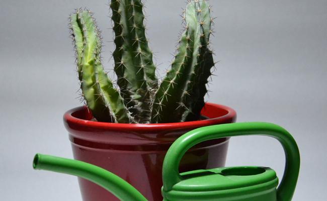 arrosage modéré des plantes d'appartement