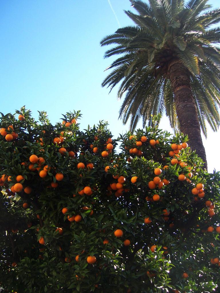 https://i1.wp.com/jardinage.provence.free.fr/images/orange_jardinage.jpg