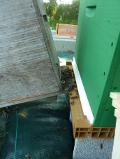 Le reste des abeilles rentrera par la porte !