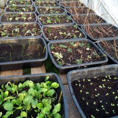 Plants de fruits et légumes